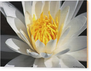 Lily Flower Wood Print