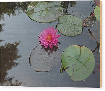 Wood Print featuring the photograph Lily Flower by Michael Porchik