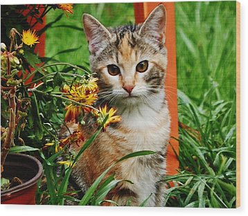 Wood Print featuring the photograph Lily Garden Cat by VLee Watson