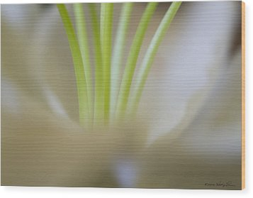 Wood Print featuring the photograph Lily II by Kathy Ponce
