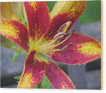 Lily In My Patio Wood Print by Sonali Gangane
