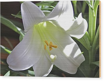 Lily Wood Print by Jim Gillen