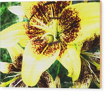 Wood Print featuring the photograph Lily Love by Shana Rowe Jackson