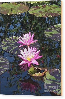 Lily Monet Wood Print by Eric  Schiabor