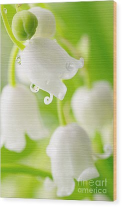 Lily Of The Valley Wood Print by Boon Mee