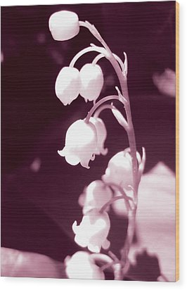 Lily Of The Valley Wood Print by Eva Csilla Horvath