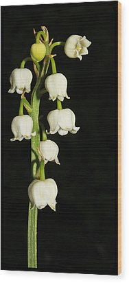 Lily Of The Valley Wood Print by Tammy Schneider