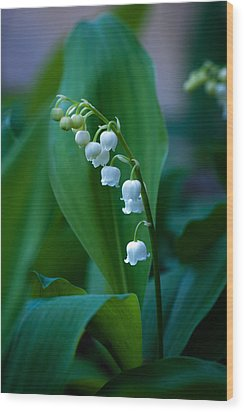 Lily Of The Valley Wood Print by Wayne Meyer