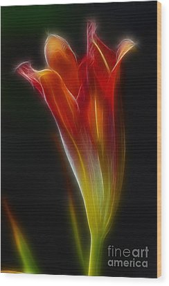 Lily Opening-5964 Wood Print by Gary Gingrich Galleries