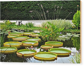 Lily Pad Garden Wood Print by Frozen in Time Fine Art Photography