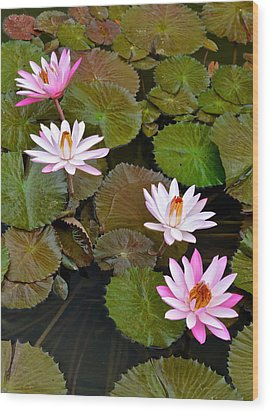 Lily Pad Haven Wood Print by Frozen in Time Fine Art Photography