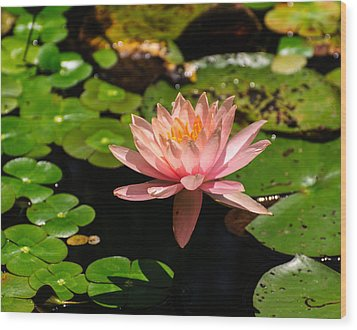 Wood Print featuring the photograph Lily Pad by John Johnson