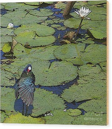 Lily Pad With Bird2 Wood Print