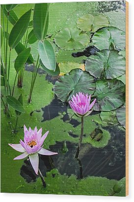 Wood Print featuring the photograph Lily Pads And Flowers by Dawn Romine