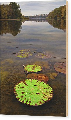 Lily Pads Decay In Fall Wood Print by Steven Llorca