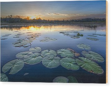 Lily Pads In The Glades Wood Print by Debra and Dave Vanderlaan