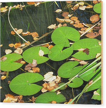Lily Pads Wood Print by Mary Bedy
