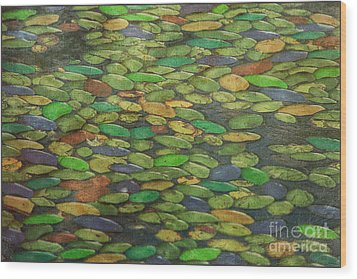 Lily Pads Wood Print by Tom York Images