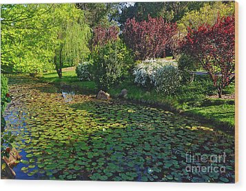 Lily Pond And Colorful Gardens Wood Print by Kaye Menner
