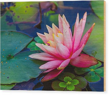 Wood Print featuring the photograph Lily Pond by John Johnson