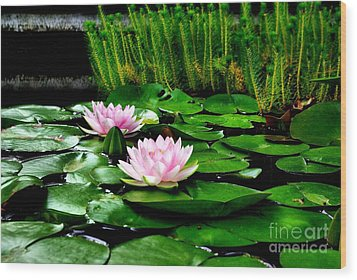 Wood Print featuring the photograph Lily Pond by John S
