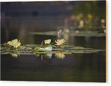 Lily Pond Wood Print by Peter Tellone
