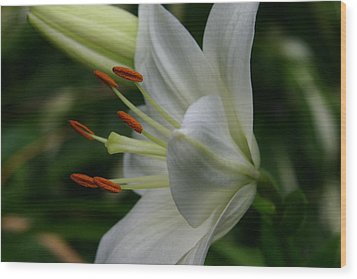 Lily Pure Wood Print by Denyse Duhaime