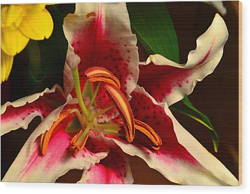 Lily Rose Flower 2 Wood Print