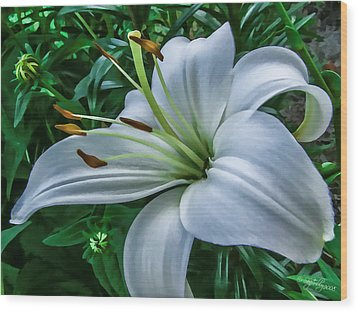 Lily Wood Print by Skip Tribby