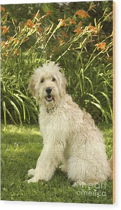 Lily The Goldendoodle With Daylilies Wood Print by Anna Lisa Yoder