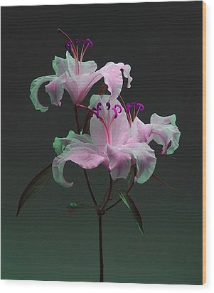 Wood Print featuring the photograph Lily Variation #04 by Richard Wiggins