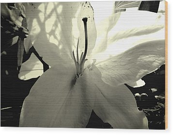 Lily White Wood Print