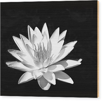 Lily#2 Wood Print by Joe Bledsoe
