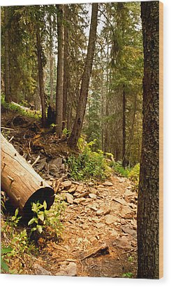 Lime Creek Trail Wood Print by Jessica Tookey