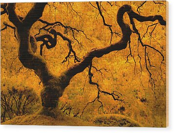 Limned In Light Wood Print by Don Schwartz