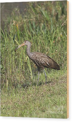 Wood Print featuring the photograph Limpkin With Apple Snail by Christiane Schulze Art And Photography