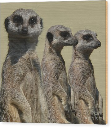 Line Dancing Meerkats Wood Print