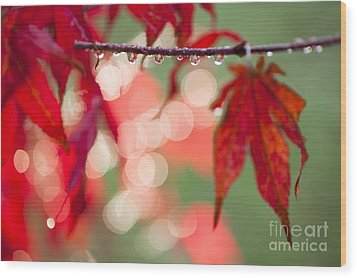 Line Of Reflections Wood Print by Anne Gilbert