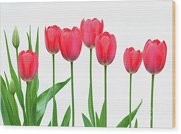 Wood Print featuring the photograph Line Of Tulips by Steve Augustin