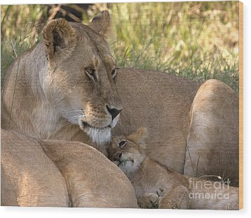Wood Print featuring the photograph Lion And Cub by Chris Scroggins