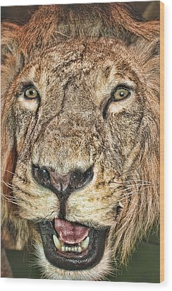 Wood Print featuring the photograph Lion by Angel Jesus De la Fuente