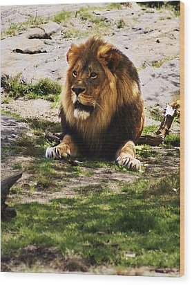Wood Print featuring the photograph Lion At Rest by B Wayne Mullins