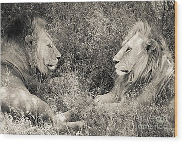 Lion Brothers Wood Print