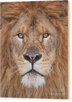 Wood Print featuring the photograph Lion Close Up by Jerry Fornarotto