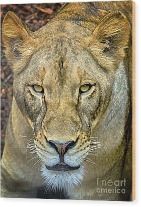 Lion Closeup Wood Print by David Millenheft