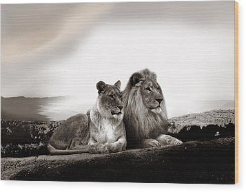 Lion Couple In Sunset Wood Print