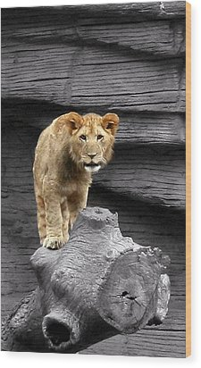 Wood Print featuring the photograph Lion Cub by Cathy Harper