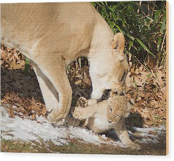 Lion Cub With Mom Wood Print