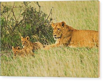 Lion Family Wood Print by Kongsak Sumano