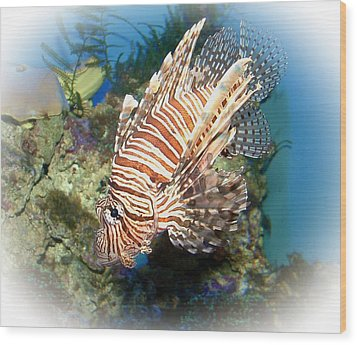 Lion Fish 2 Wood Print by TN Fairey